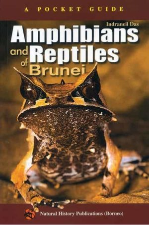 Amphibians and Reptiles of Brunei