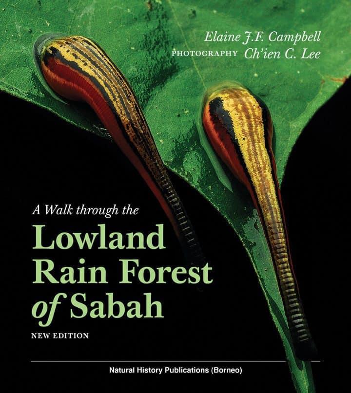 Lowland Rain Forest of Sabah
