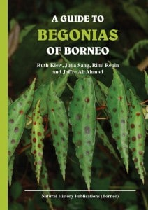 Begonia softcover