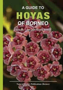 Hoya Cover 29 March