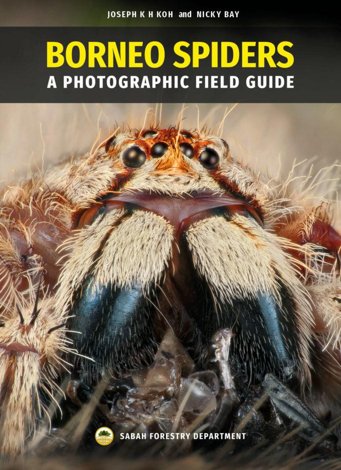 Spiders of Borneo Cover