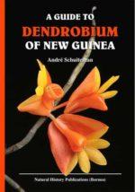 Dendrobium of New Guinea